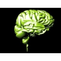 Pamäť a normálná funkciá nervovej sústavy